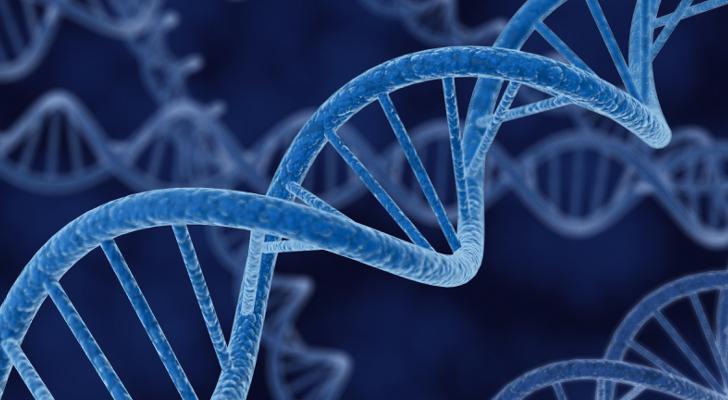 Risultati immagini per gene