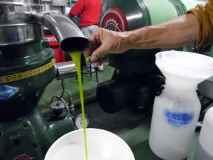 """L'olio del frantoio """"La Romita"""" ha un colore molto simile a quello originale delle olive"""