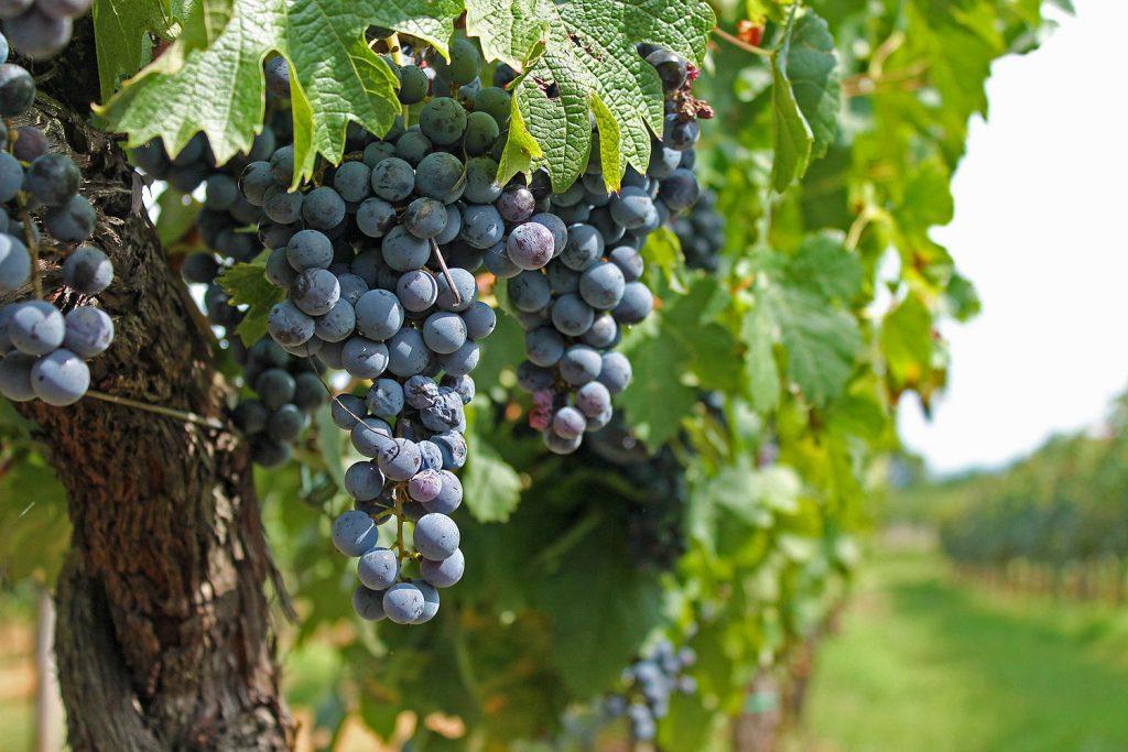 vino nobile montepulciano 2