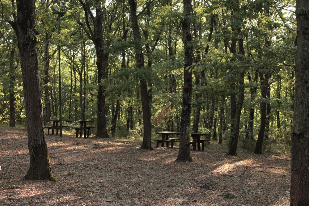Il bosco delle Cerraie